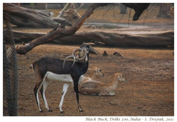 Animals from the Delhi Zoo (India) - Kalpana Image Archives